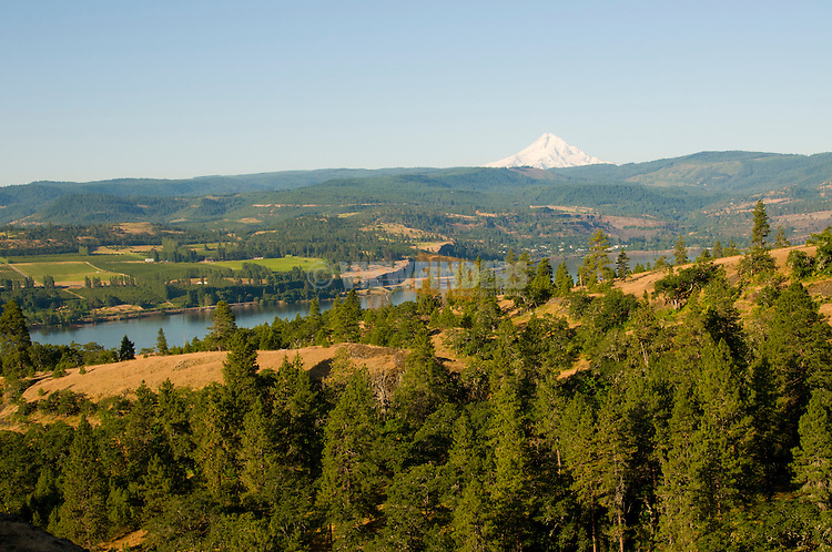 View of Mt. Hood and Mosier on the Columbia Gorge, Oregon