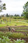 O'o Farm in Kula, Maui, Hawaii, USA