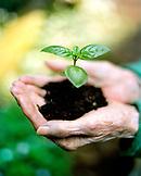 USA, California, Eureka, close-up of human hands holding seedling