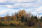 Fall foliage, farm landscape