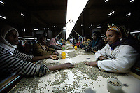 workers process coffee beans in the main coffee mill in Addis Ababa, Ethiopia on Thursday January 25 2007.