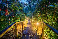 Walkway at Sacha Lodge, an Amazon Rainforest lodge near Coca in Euador, South America