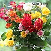 Gisela, FLOWERS, photos+++++,DTGK1965,#f#