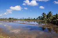 Dominikanische Republik, Reisfelder bei Nagua