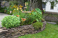 Raised bed with perennials, tropicals, annuals, lilies, daylilies, sedum, black eyed Susan rudgecias, patio, picket fence, lawn grass, house, garden lighting lamps, birch trees