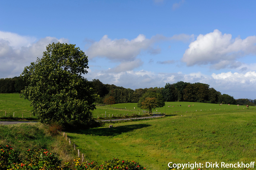 Hügellandschaft, Dänischer Wohld
