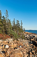 Rocky coast at Ship Harbor, Acadia NP, Maine, ME, USA