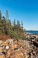 Rocky coast at Ship Harbor, Acadia NP, Maine, ME, USA
