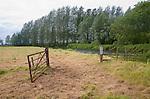 River Waveney valley landscape at Geldeston, Suffolk Norfolk border, England