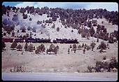 &quot;276-3 about 5 miles south of Durango this freight climbs along Highway 160&quot;<br /> D&amp;RGW  s. of Durango, CO  Taken by Owen, Mac - 6/1975