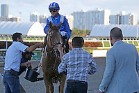 HALLANDALE BEACH, FL - FEBRUARY 11:  Almanaar (GB) #2 with jockey Joel Rosario on board, heads to the winners circle after winning the Gulfstream Park Turf Handicap G1  at Gulfstream Park on February 11, 2017 in Hallandale Beach, Florida. (Photo by Liz Lamont/Eclipse Sportswire/Getty Images)