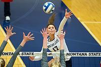 MSU LadyBobcats vs ISU LadyBengals (volleyball)