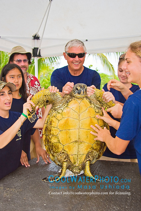 Teacher Marc Rice, his students from Hawaii Preparatory Academy (HPA) and a Green Sea Turtle, Chelonia mydas, Marine Turtle Research, organized by researcher George Balazs, PhD, NOAA National Marine Fisheries Service (NMFS), HPA students and teachers (NOAA/HPA Marine Turtle Program), and ReefTeach volunteers at Kaloko-Honokohau National Historical Park, Kona Coast, Big Island, Hawaii, Pacific Ocean.