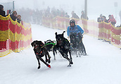 2nd February 2019, Thuringia, Frauenwald, Germany; Sled dog handler Horst Schr and his team. 120 mushers from five nations with their huskies, samoyeds, malamutes or Greenland dogs started.