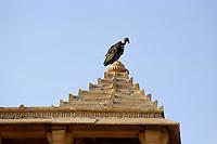 Indien, Jaisalmer (Rajasthan), Geier bei Chhatri (Totengedenkstätte)
