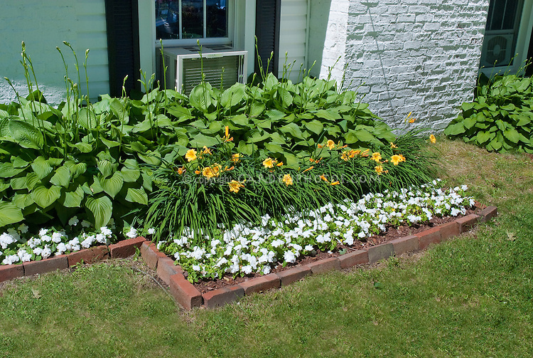 Daylily Stella D 39 Oro With Hostas And Impatiens As