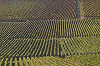 Vineyard. Monthelie. Burgundy, France