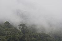 Cloudforest with fog, Central Valley, Costa Rica, Central America, December 2006