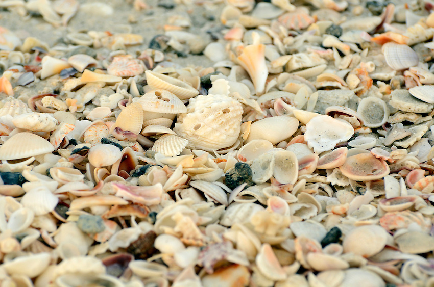 Sea Shells on Naples Beach Florida