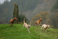FAO JANET TOMLINSON, DAILY MAIL PICTURE DESK<br /> Pictured: Dogs run in one of the fields Monday 14 November 2016<br /> Re: The Dog House in the village of Talog, Carmarthenshire, Wales, UK