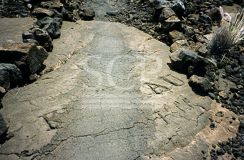 Big Island, Hawaii. Historic Kings Trail as it passes through petroglyph site at Waikoloa Resort.