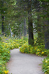 A path winds through the forest in Glacier National Park.