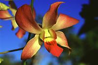 Orquideas e Flores