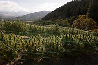 High Valley Organics