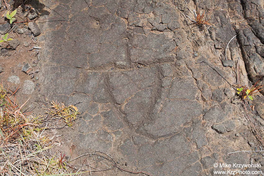 Petroglyph at the Pu'u Loa Petroglyph Field in Hawaii Volcanoes National Park, Big Island, Hawaii