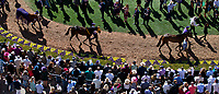 DEL MAR, CA - NOVEMBER 04: Horses walk the paddock on Day 2 of the 2017 Breeders' Cup World Championships at Del Mar Racing Club on November 4, 2017 in Del Mar, California. (Photo by Kyle Grantham/Eclipse Sportswire/Breeders Cup)