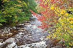 Fall foliage along the Wild Ammonoosuc River  in the White Mountain National Forest, NH, USA