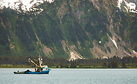 Commercial Seine fishing vessel Tenacious in College Fjord, Prince William Sound, southcentral, Alaska.