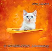 Xavier, ANIMALS, REALISTISCHE TIERE, ANIMALES REALISTICOS, cats, photos+++++,SPCHCATS842,#a#
