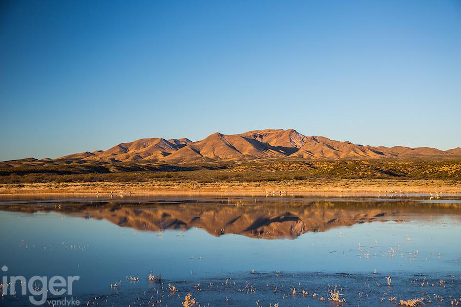 Morning Reflection at Bosque del Apache, New Mexico