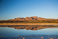 Morning Reflection at Bosque del Apache, New Mexico
