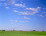 Ogle County, IL       © Terry Donnelly   <br /> Summer clouds over wheat fields with farms on the distant horizon