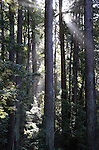 Butano State park