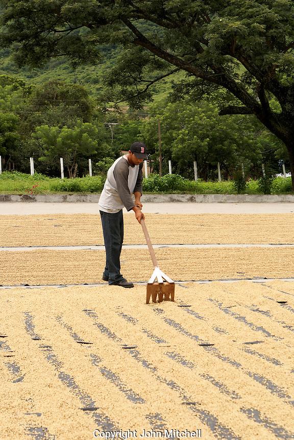 Man raking coffee beans drying in the sun near Matagalpa, Nicaragua