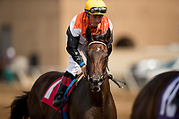 DEL MAR, CA - JULY 29: Summering with Drayden Van Dyke breaks her maiden at Del Mar on July 28, 2018 in Del Mar, California.(Photo by Alex Evers/Eclipse Sportswire)