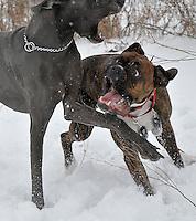 Porky and Anastasia get tough at Perch Creek