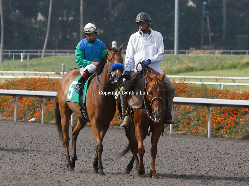 July 10, 2010.Tres Borrachos riden by Victor Espinoza  in the post parade before the Hollywood God Cup at Hollywood Park, Inglewood, CA