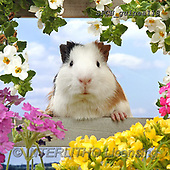 Xavier, ANIMALS, REALISTISCHE TIERE, ANIMALES REALISTICOS, photos+++++,SPCHGUINEA118,#A#, EVERYDAY ,funny