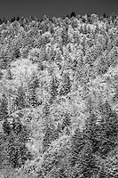 White Trees and Black Shadows