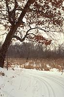 Cross country ski trail at University of Minnesota Arboretum. Chanhassen Minnesota USA