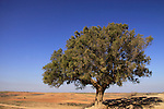 T-122 Tamarisk tree on Tel Nagila