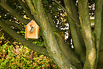 Birdhouse with sparrow in red maple tree.