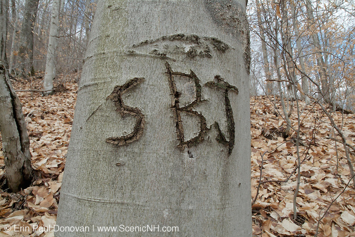Close-up initials carved into a Beechnut tree on the side of a hiking trail in a New Hampshire   USA