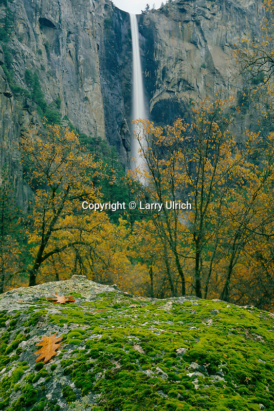Bridalveil Falls and black oaks<br />