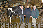 Tim Kirby Duagh with his heifer that was voted the Supreme Champion at the Kerry Holstein Breeders show and sale in Castleisland Mart on Friday l-r: Wiiliam Horgan Chairman, Maurice Harty Ballyheigue and Richard Hartnett Castleisland Mart