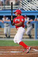 August 3rd 2008:  Edwin Gomez of the Batavia Muckdogs, Class-A affiliate of the St. Louis Cardinals, during a game at Dwyer Stadium in Batavia, NY.  Photo by:  Mike Janes/Four Seam Images